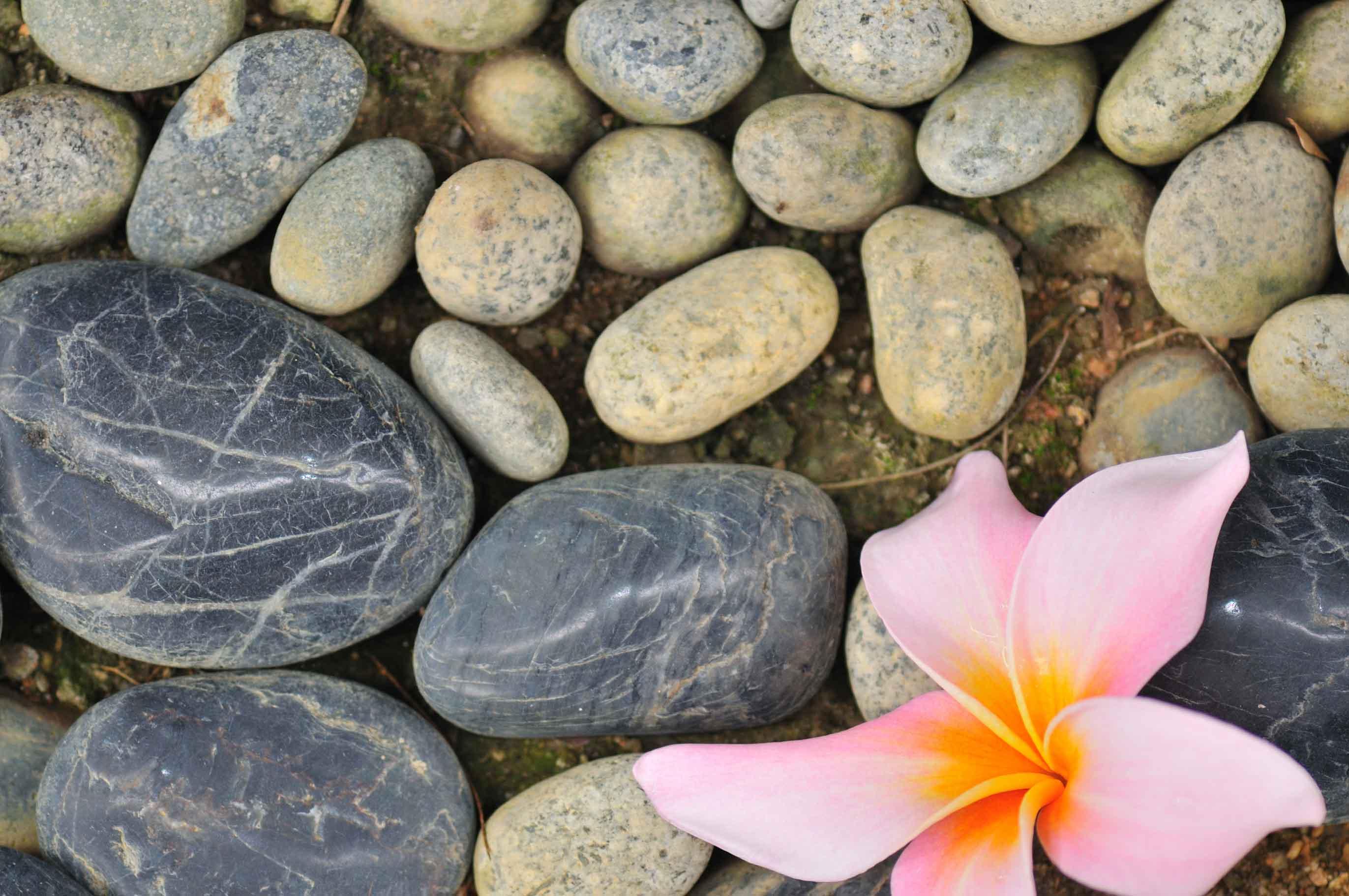 La tnr e l esercizio terapeutico conoscitivo etc - Giardino zen in miniatura ...